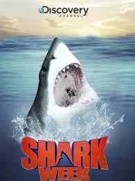 鲨鱼周(海外剧)