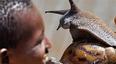 非洲人疯狂起来不输中国吃货,满山遍野蜗牛被吃个精光!