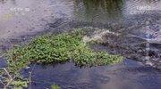 《自然传奇》 20201119 野生动物大狂欢·鳄鱼