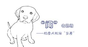 """""""闻""""名机场 检疫犬机场""""当差"""""""