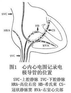 皮肤生理结构图
