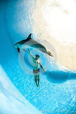 海豚的身体结构图