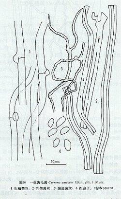 大班简笔画树缠绕