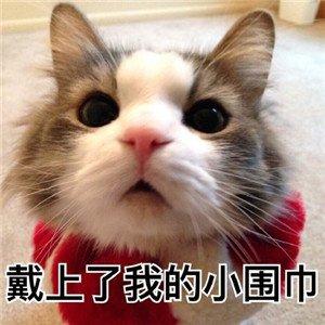 猫咪撒娇表情包3.jpg