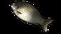 鲤鱼.png