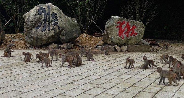 猴王谷景区【5折】_温州旅游酒店团购
