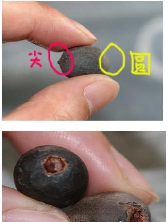 求碗莲种植方法图解教程?