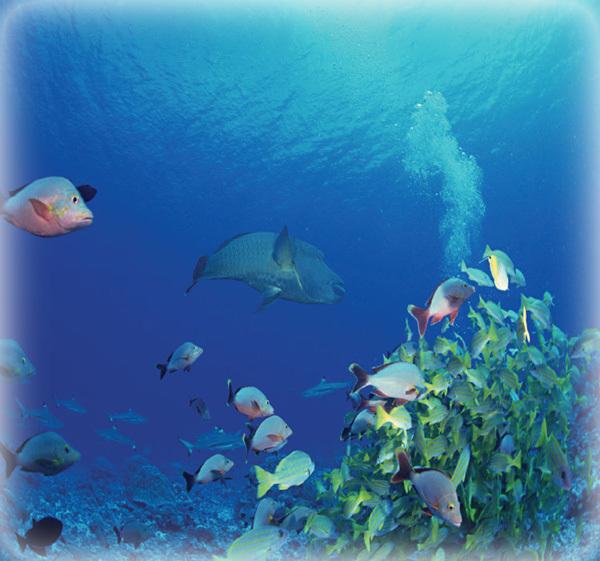壁纸 海底 海底世界 海洋馆 水族馆 桌面 600_561
