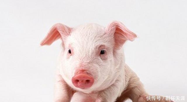 <b>这几个月出生的属猪人注定要受苦吗速看!</b>