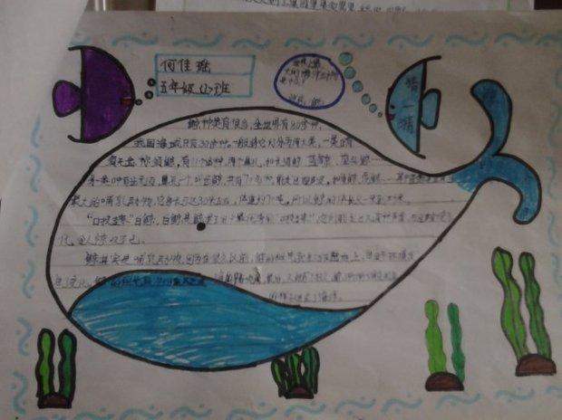 鲸的自述手抄报五年级