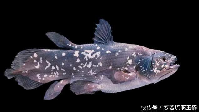 情感测试你认为哪条鱼是画的测他对你是真心还是虚情假意