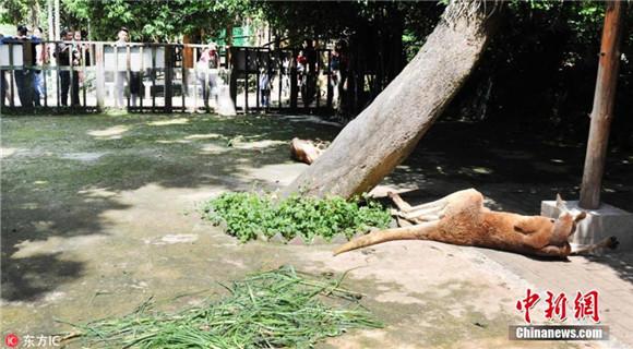 福州动物园游客扔石块砸袋鼠 致一死一伤