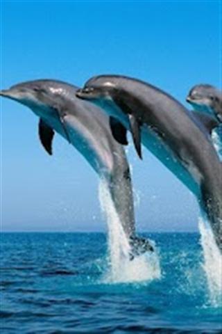 海豚动态壁纸下载_v1.0