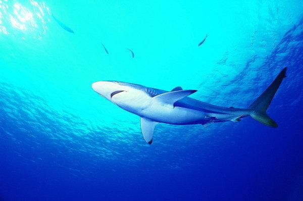 壁纸 动物 海洋动物 桌面 600_398
