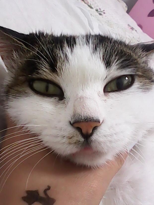 猫咪眼睛流泪.两只眼睛瞳孔还不一样大,怎么办怎么办