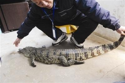 带头套可爱鳄鱼头像