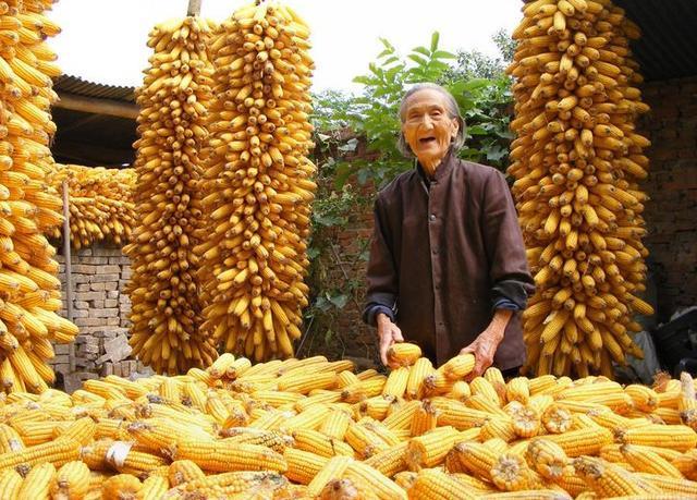农民心声:粮食补贴不要了,坑了全民,肥了谁?