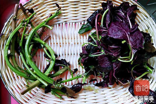 这吃水比蔬菜更菠菜,大人多吃长孩子,身体多补钙超低脂碳减图片