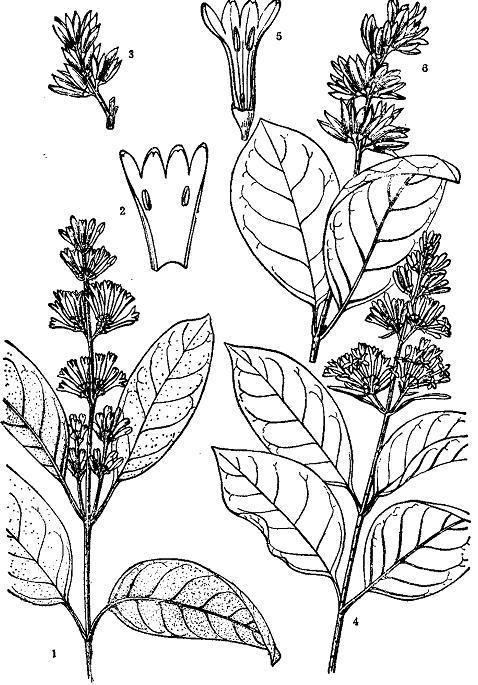 紫丁香手绘图片