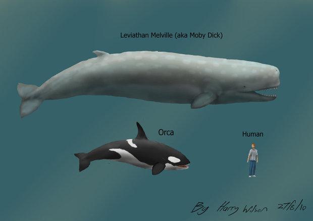蓝鲸的嘴部结构图