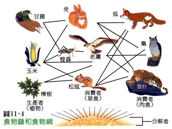 食物链的顶端是什么动物