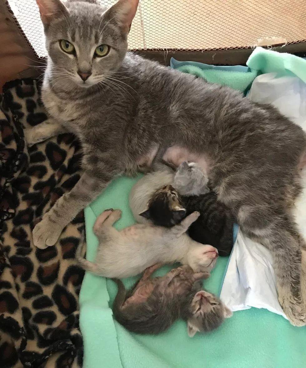 灾难中的猫妈妈为了肚子里的孩子坚强活下来,年老后为了不拖累孩子,竟然......