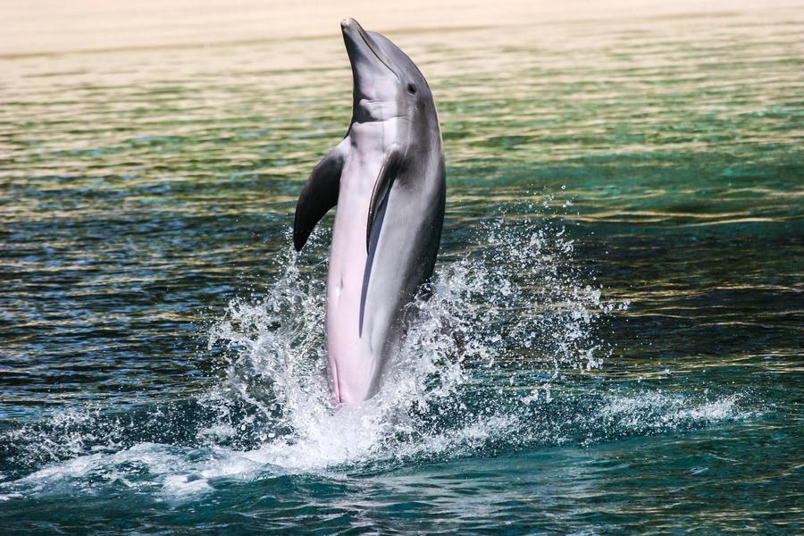 素描动物海豚步骤