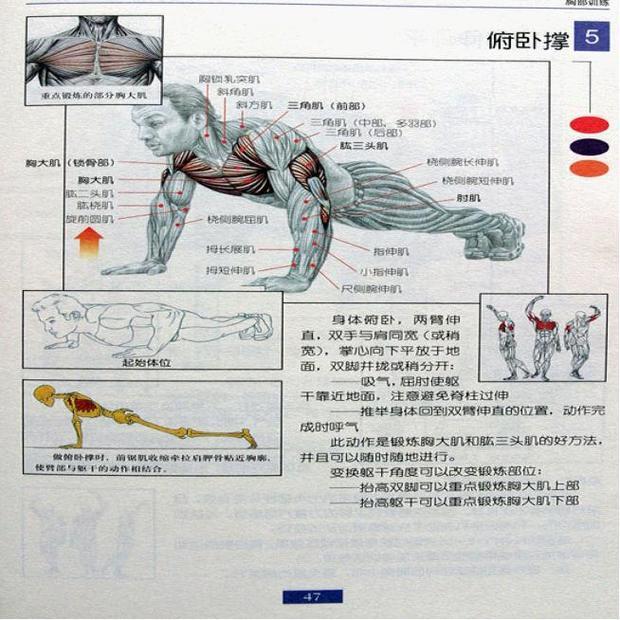 锻炼手臂肌肉有哪些有效的方法?