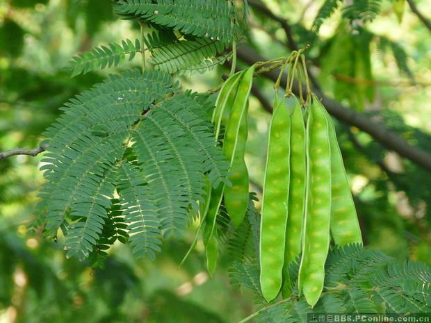 包括根茎叶花果实种子的介绍