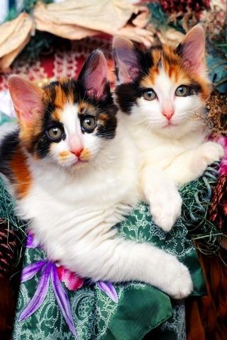 可爱小猫壁纸_360手机助手