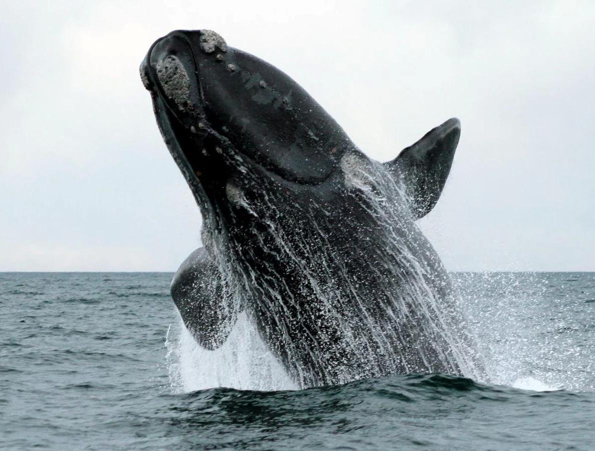 高清壁纸 鲸鱼