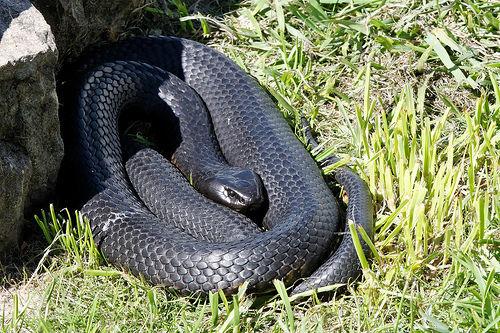 蛇 身体结构
