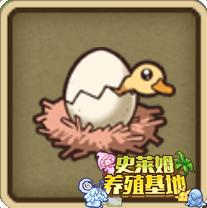 装扮孵化的鸭.jpg
