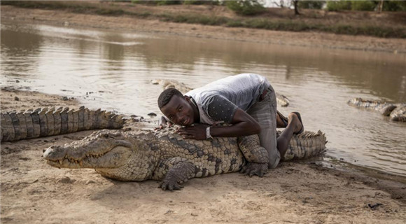 鳄鱼在布基纳法索成团宠 村民可任意撸鳄鱼