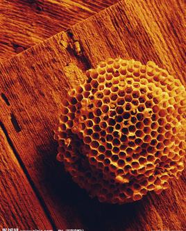 蜂巢_360百科
