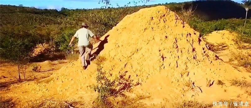 """世界最大""""白蚁王国"""",约3米高的土丘遍布大地,十分壮观"""