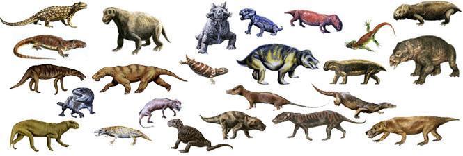 似哺乳类爬行动物