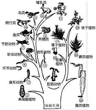 根据生物进化的基本规律推断