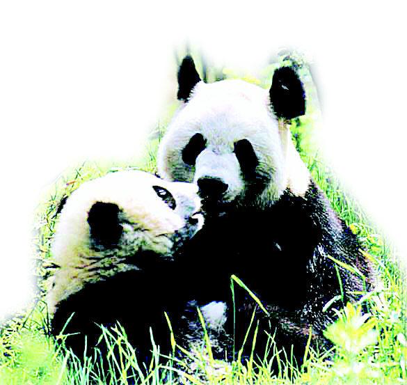 青岛森林野生动物园,位于开发区小珠山国家森林公园风景区,是一处融