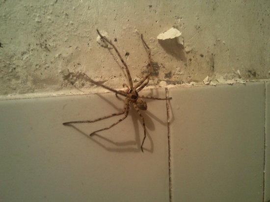 大蜘蛛在家里的图片_在家里看电视的图片_宅在家里 ...
