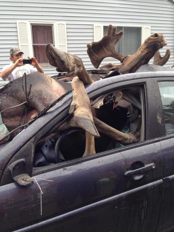 Bear Hit By Car  People Dead