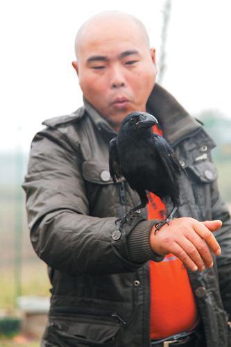 乌鸦喝水简笔画组图 乌鸦喝水的故事