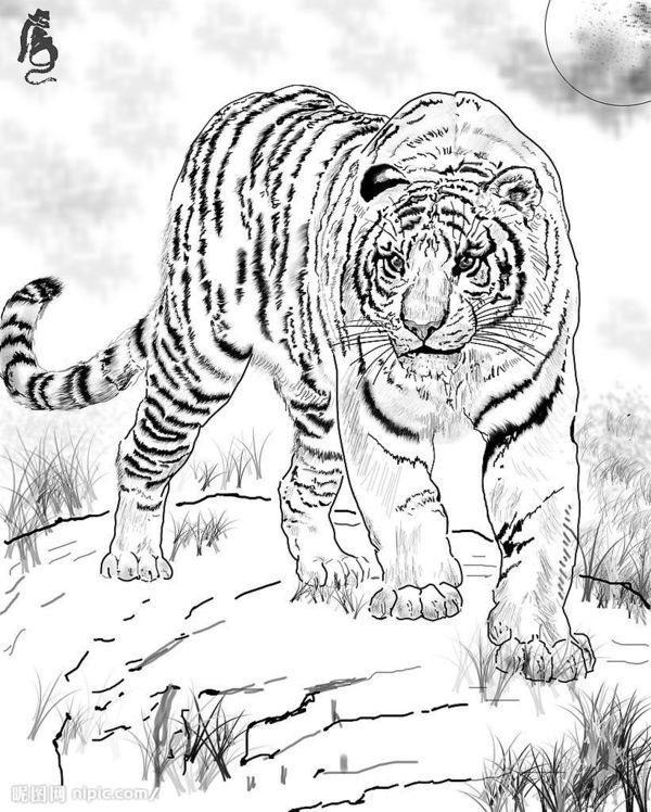 给我几张白描的动物图