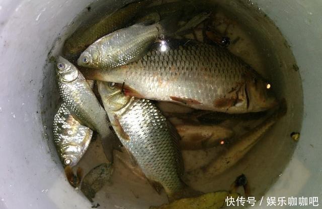 中国的四大渔场如今却只剩下三个,你知道是为