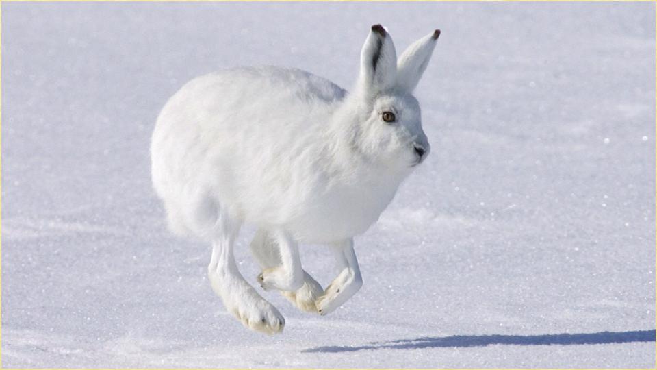 1080 动物照片 。该应用程序提供了一个大的动物图片的原始质量。动物图片特点:*动物的图片是完全免费的应用程序提供快速,友好的用户界面*您可以分享动物照片使用,Skype和Facebook,Twitter和动物也可以照片通过电子邮件使用蓝牙,邮件时,Outlook时,Picasa , Gmail,谷歌,或与朋友分享动物图片共享!*所有的照片可以保存到照片图像画廊*设置动物图片作为首页壁纸*图片换色器提供了更改照片的颜色,所有的颜色都是随机挑选出来,成为红色,绿色,橙色,粉色,蓝色等颜色的混合*放大