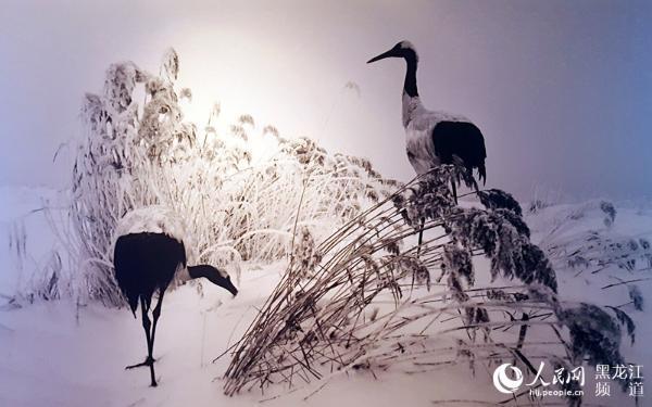 王克举丹顶鹤黑白摄影艺术馆在齐齐哈尔开馆