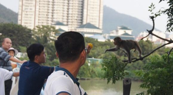 市民围观猴子影响交通 林业部门实施抓捕