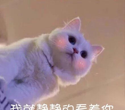 无手机图片猫咪,我超凶的,还不收藏?!吗收藏的里水印表情包表情如何qq的删除图片