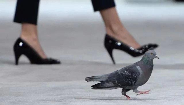 """鸽子竟成""""毒贩""""工具:警方拿下该团伙 - 一统江山 - 一统江山的博客"""