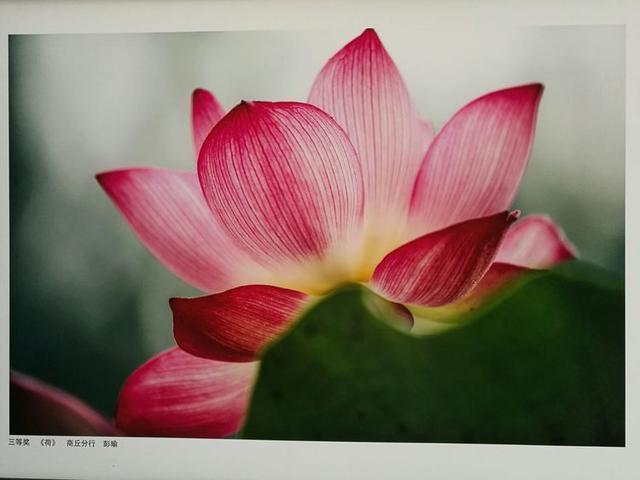 中国工商银行董事长易会满观看河南省分行廉洁文化员工摄影展图片